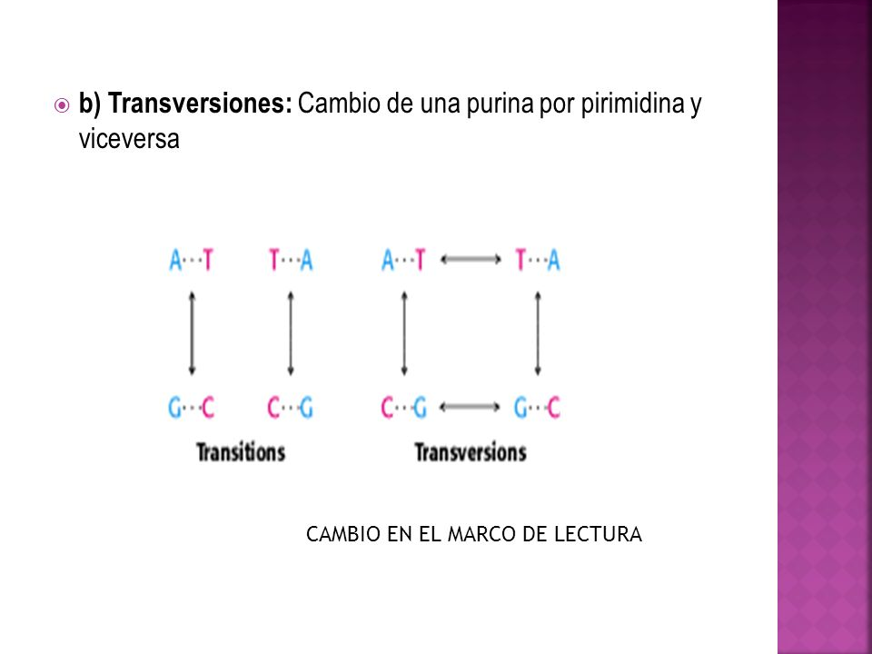 b) Transversiones: Cambio de una purina por pirimidina y viceversa