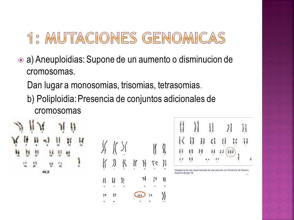 1: Mutaciones genomicas