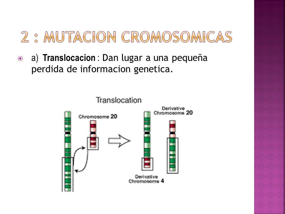 2 : Mutacion cromosomicas