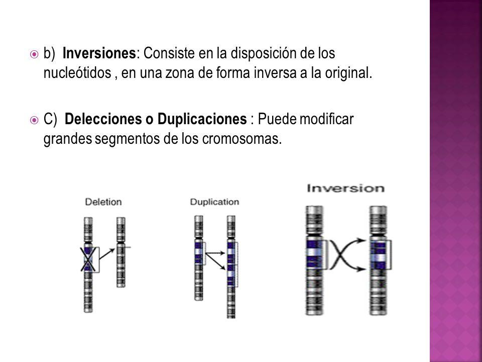 b) Inversiones: Consiste en la disposición de los nucleótidos , en una zona de forma inversa a la original.