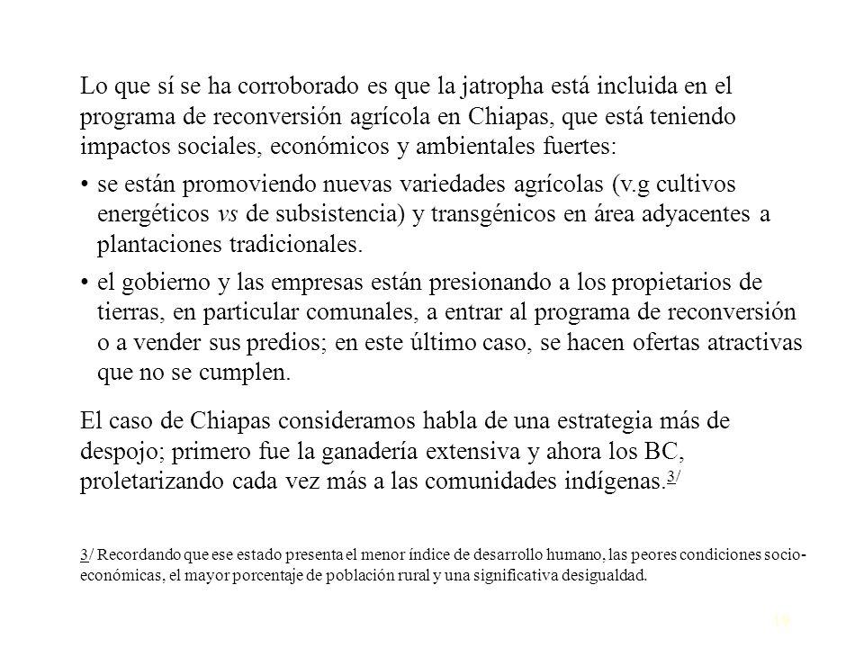 Lo que sí se ha corroborado es que la jatropha está incluida en el programa de reconversión agrícola en Chiapas, que está teniendo impactos sociales, económicos y ambientales fuertes: