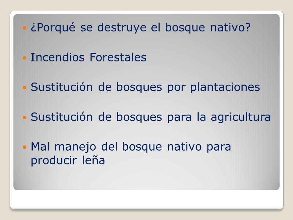 ¿Porqué se destruye el bosque nativo