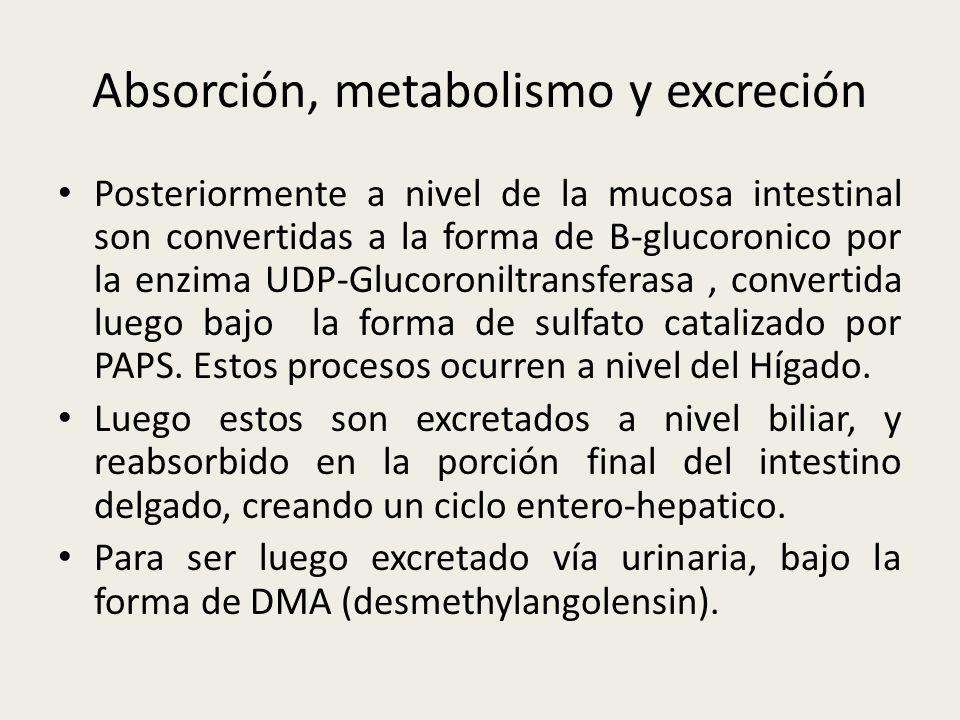 Absorción, metabolismo y excreción