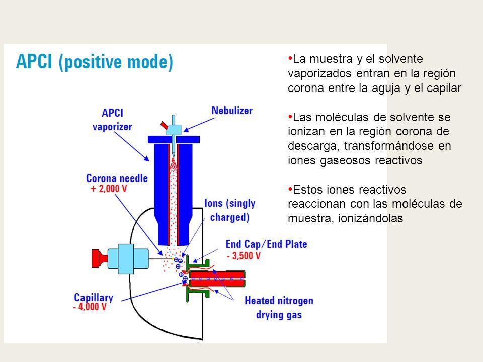 La muestra y el solvente vaporizados entran en la región corona entre la aguja y el capilar