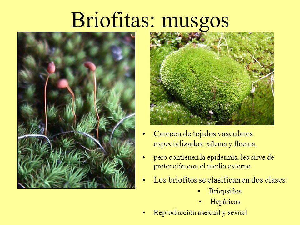 Clases De Musgo Awesome Aunque Los Cientficos Lo Llamen Bryophyta