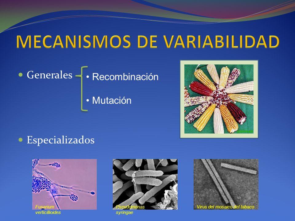 MECANISMOS DE VARIABILIDAD