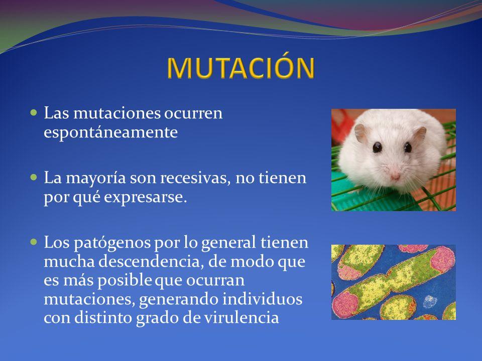 MUTACIÓN Las mutaciones ocurren espontáneamente