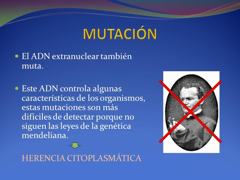 MUTACIÓN El ADN extranuclear también muta.