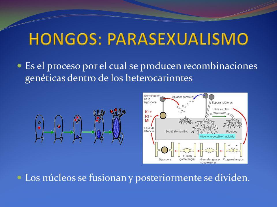 HONGOS: PARASEXUALISMO