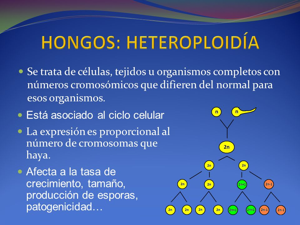 HONGOS: HETEROPLOIDÍA