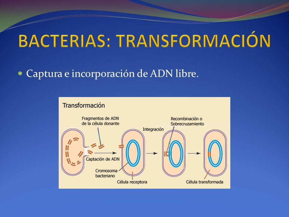 BACTERIAS: TRANSFORMACIÓN