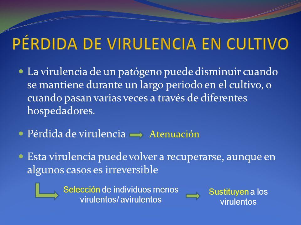 PÉRDIDA DE VIRULENCIA EN CULTIVO