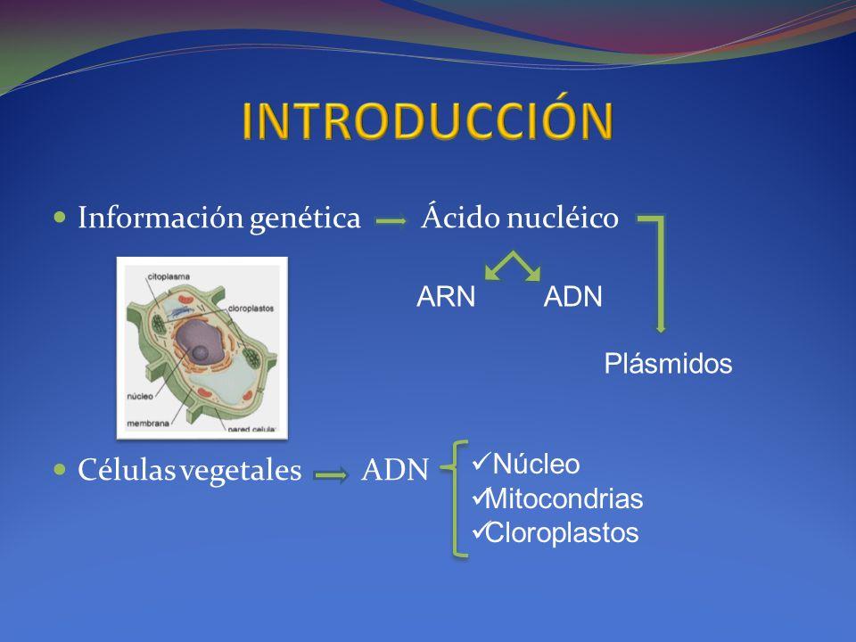 INTRODUCCIÓN Información genética Ácido nucléico Células vegetales ADN