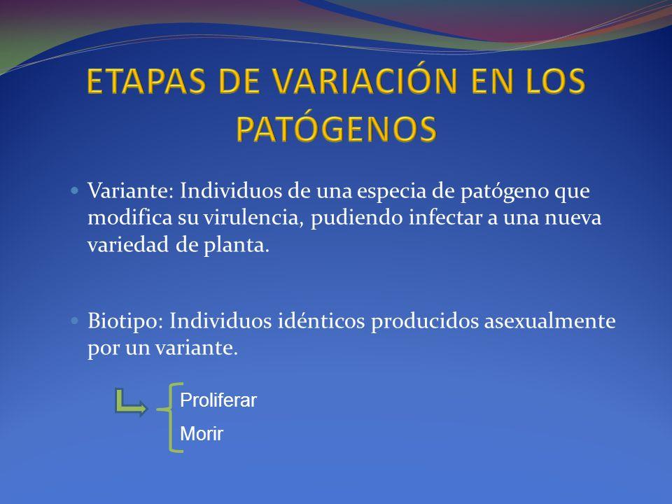ETAPAS DE VARIACIÓN EN LOS PATÓGENOS