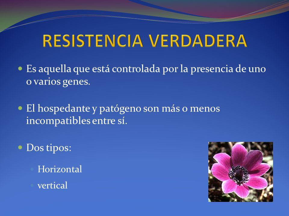 RESISTENCIA VERDADERA