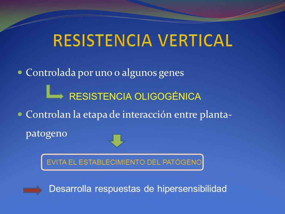RESISTENCIA VERTICAL Controlada por uno o algunos genes