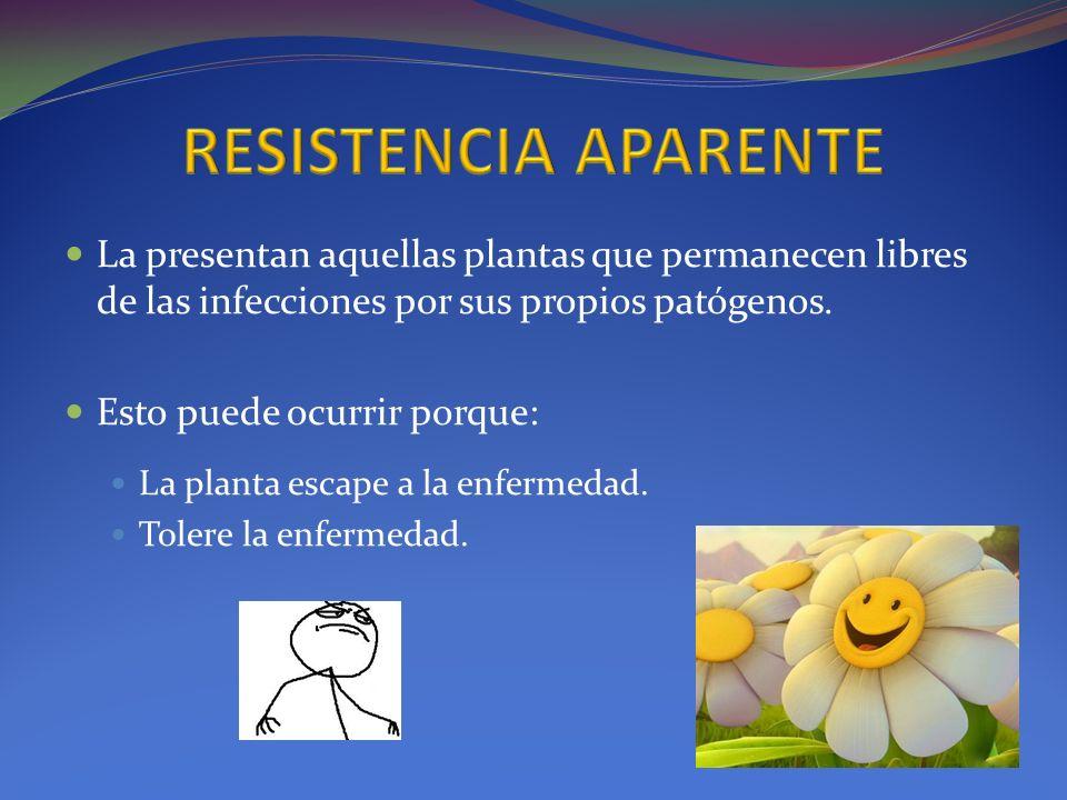RESISTENCIA APARENTE La presentan aquellas plantas que permanecen libres de las infecciones por sus propios patógenos.