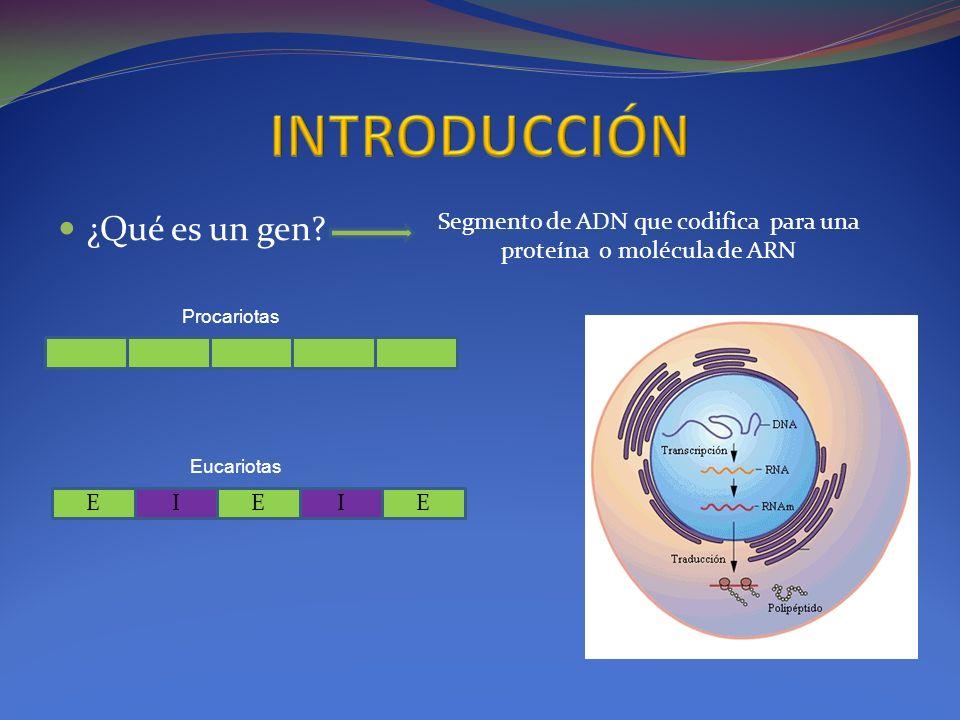 Segmento de ADN que codifica para una proteína o molécula de ARN