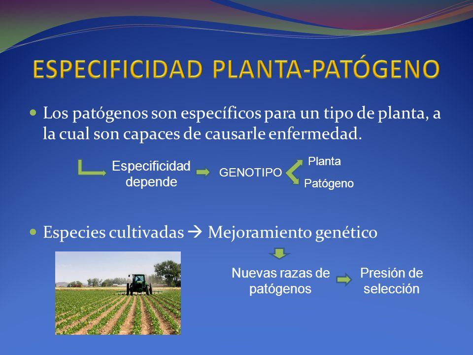 ESPECIFICIDAD PLANTA-PATÓGENO