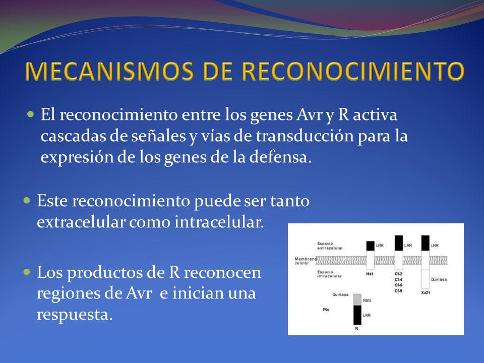 MECANISMOS DE RECONOCIMIENTO