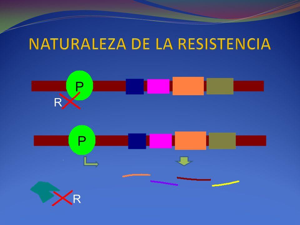 NATURALEZA DE LA RESISTENCIA
