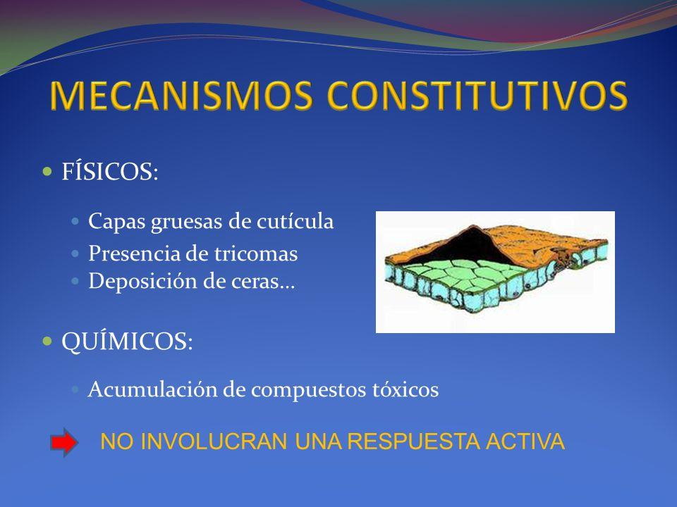 MECANISMOS CONSTITUTIVOS