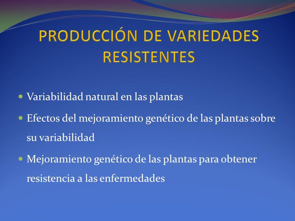 PRODUCCIÓN DE VARIEDADES RESISTENTES