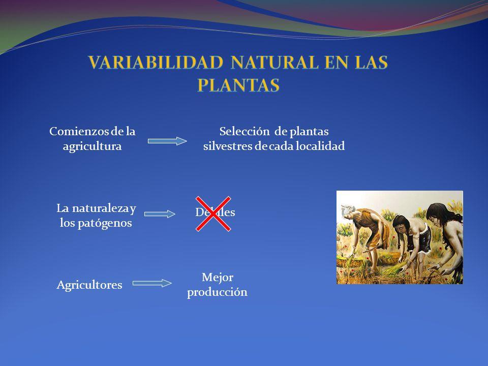 VARIABILIDAD NATURAL EN LAS PLANTAS