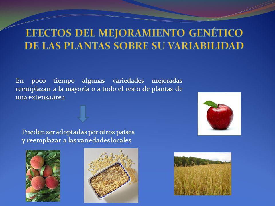 EFECTOS DEL MEJORAMIENTO GENÉTICO DE LAS PLANTAS SOBRE SU VARIABILIDAD
