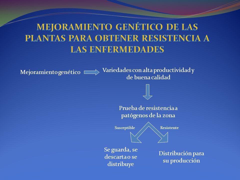MEJORAMIENTO GENÉTICO DE LAS PLANTAS PARA OBTENER RESISTENCIA A LAS ENFERMEDADES