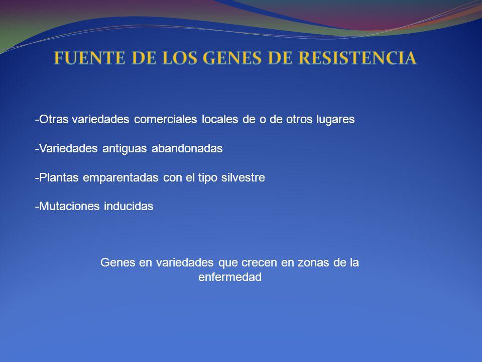 FUENTE DE LOS GENES DE RESISTENCIA