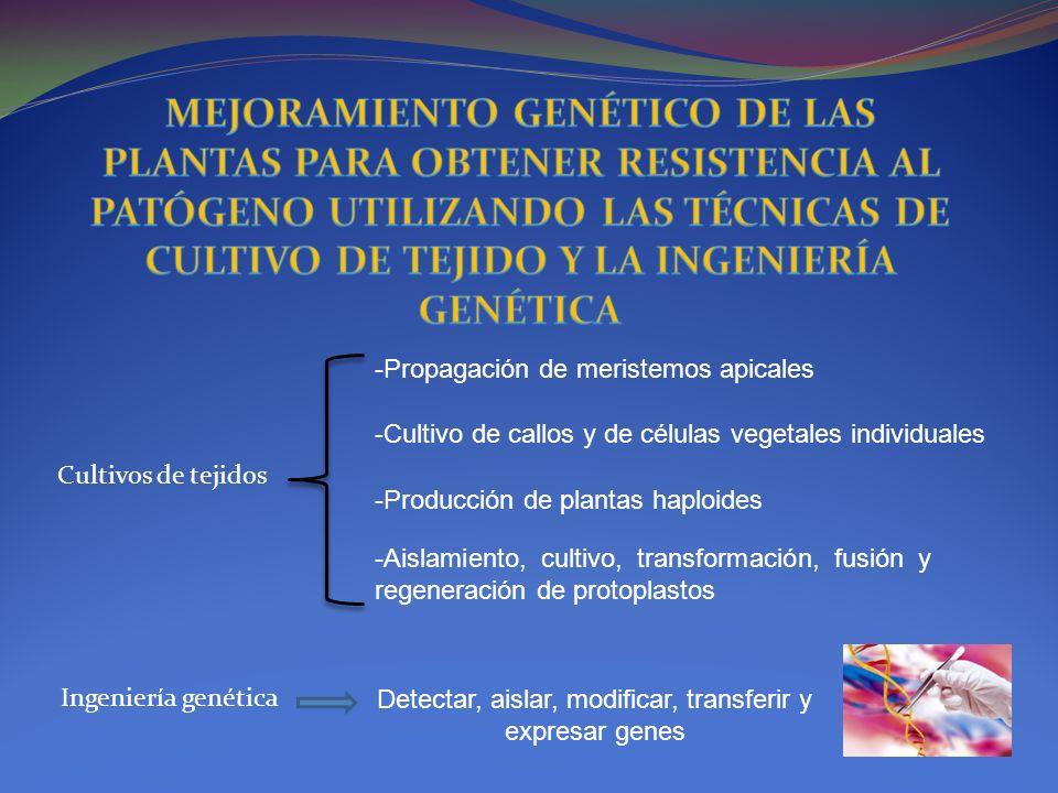 Detectar, aislar, modificar, transferir y expresar genes