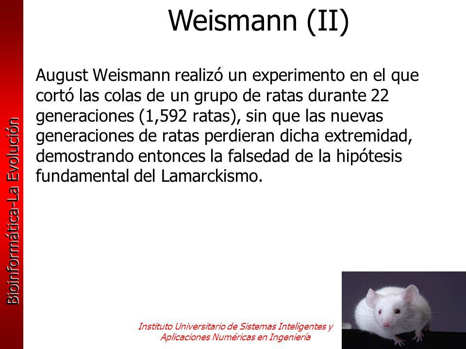Weismann (II)
