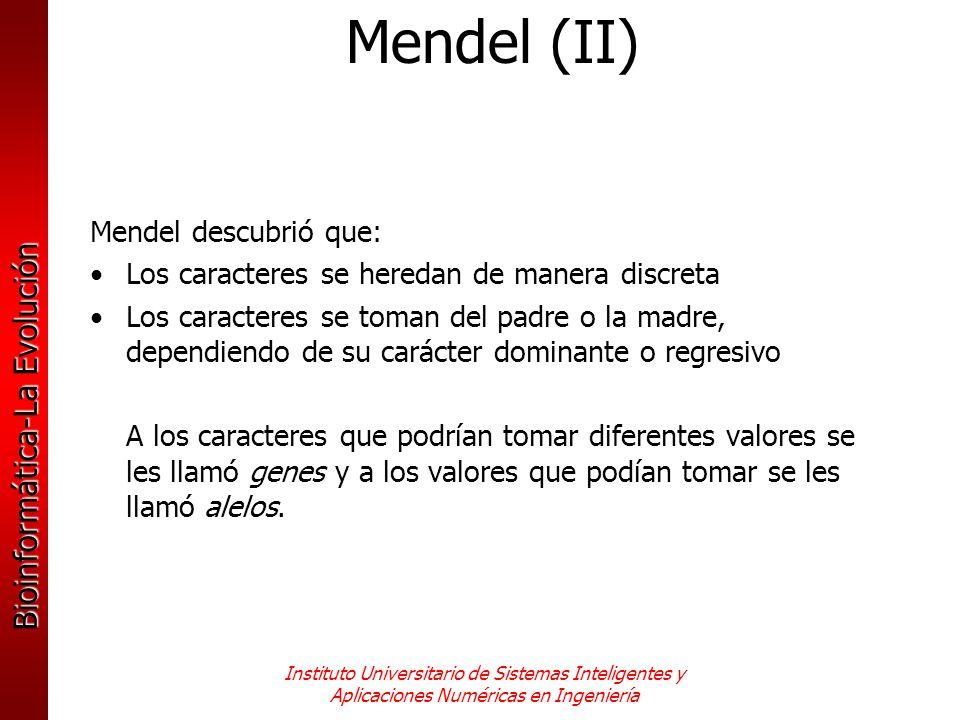 Mendel (II) Mendel descubrió que: