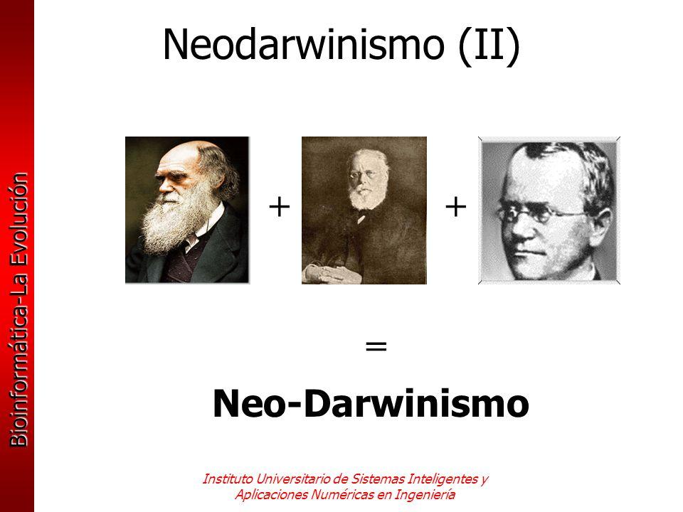 Neodarwinismo (II) + + = Neo-Darwinismo