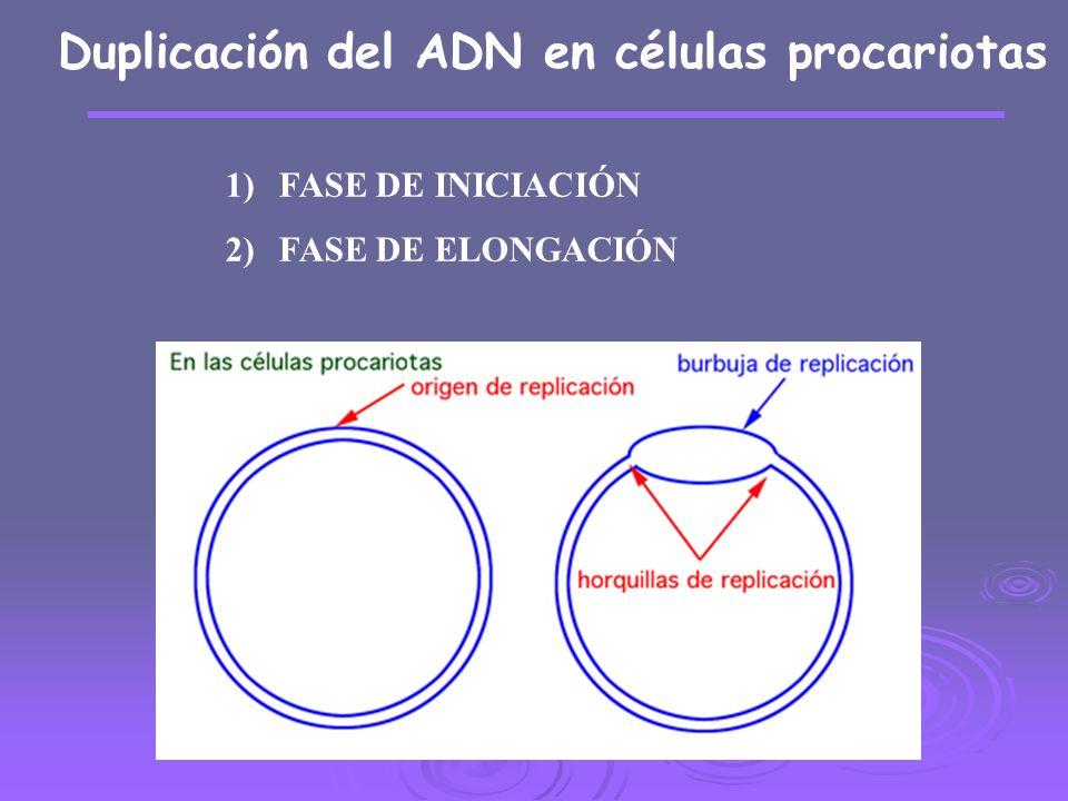 Duplicación del ADN en células procariotas