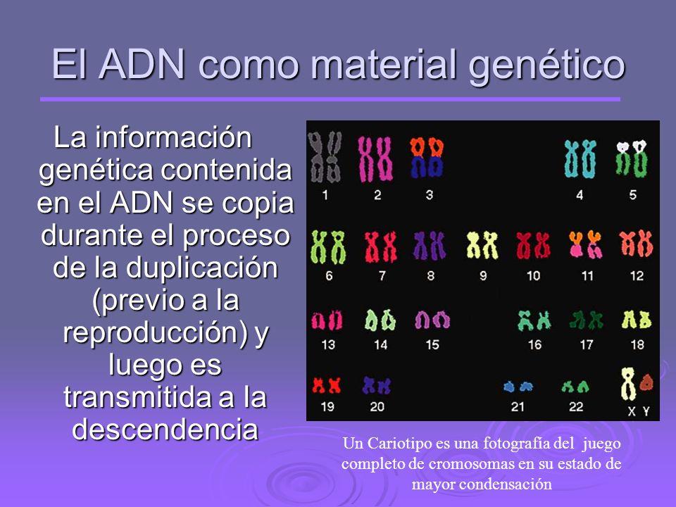 El ADN como material genético