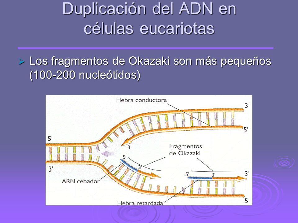 Duplicación del ADN en células eucariotas