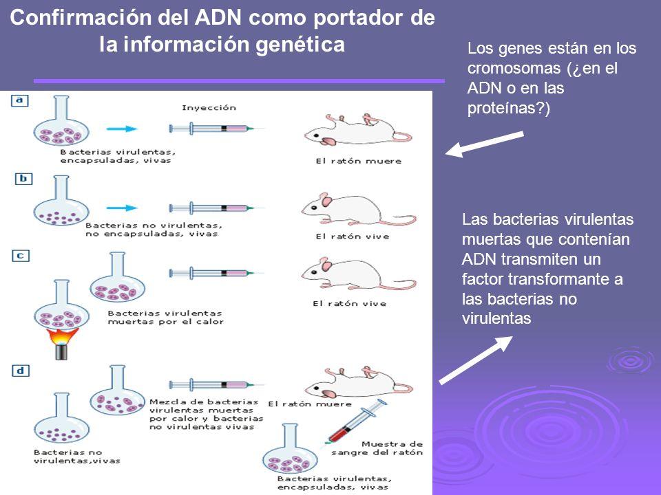Confirmación del ADN como portador de la información genética