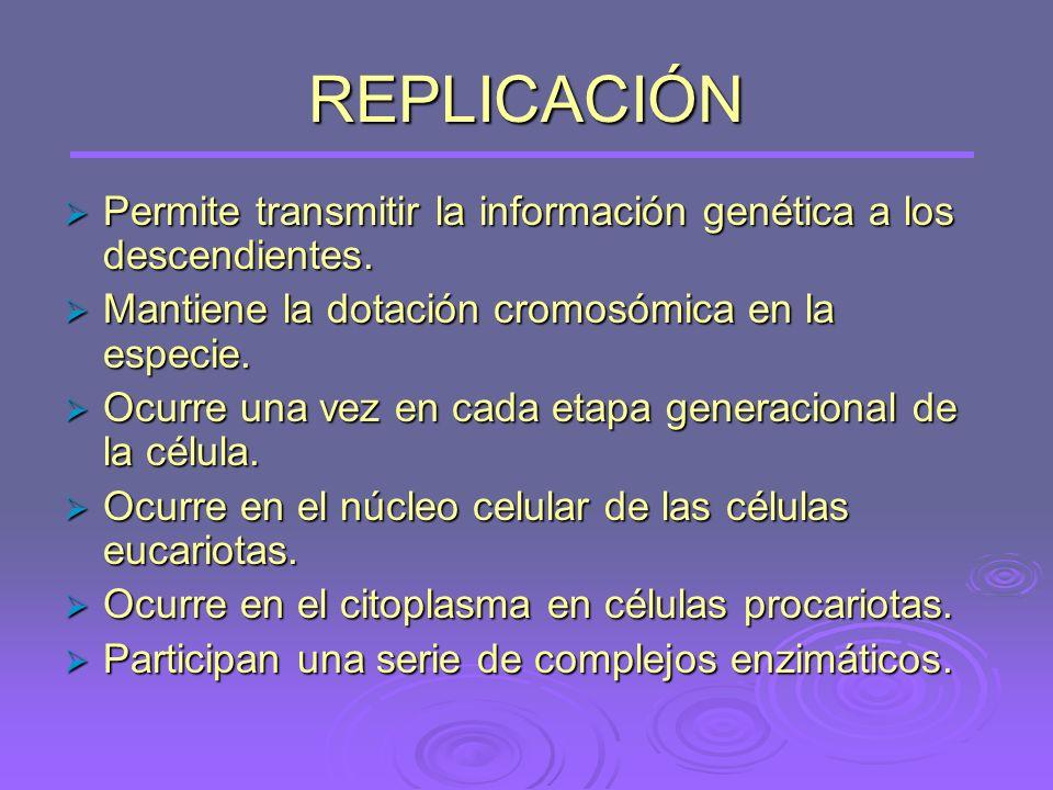 REPLICACIÓN Permite transmitir la información genética a los descendientes. Mantiene la dotación cromosómica en la especie.