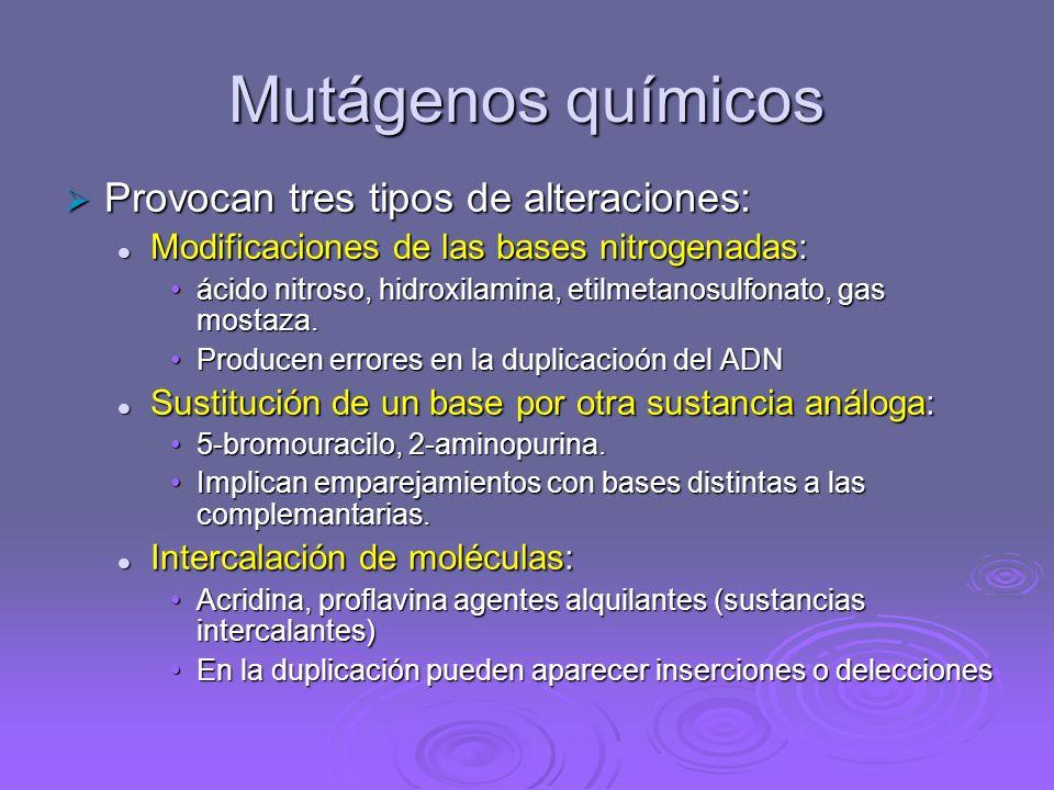 Mutágenos químicos Provocan tres tipos de alteraciones: