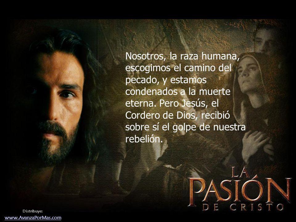 Nosotros, la raza humana, escogimos el camino del pecado, y estamos condenados a la muerte eterna. Pero Jesús, el Cordero de Dios, recibió sobre sí el golpe de nuestra rebelión.