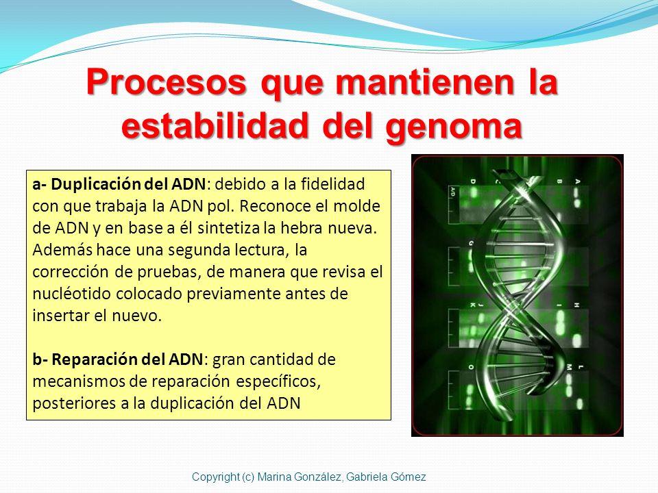 Procesos que mantienen la estabilidad del genoma