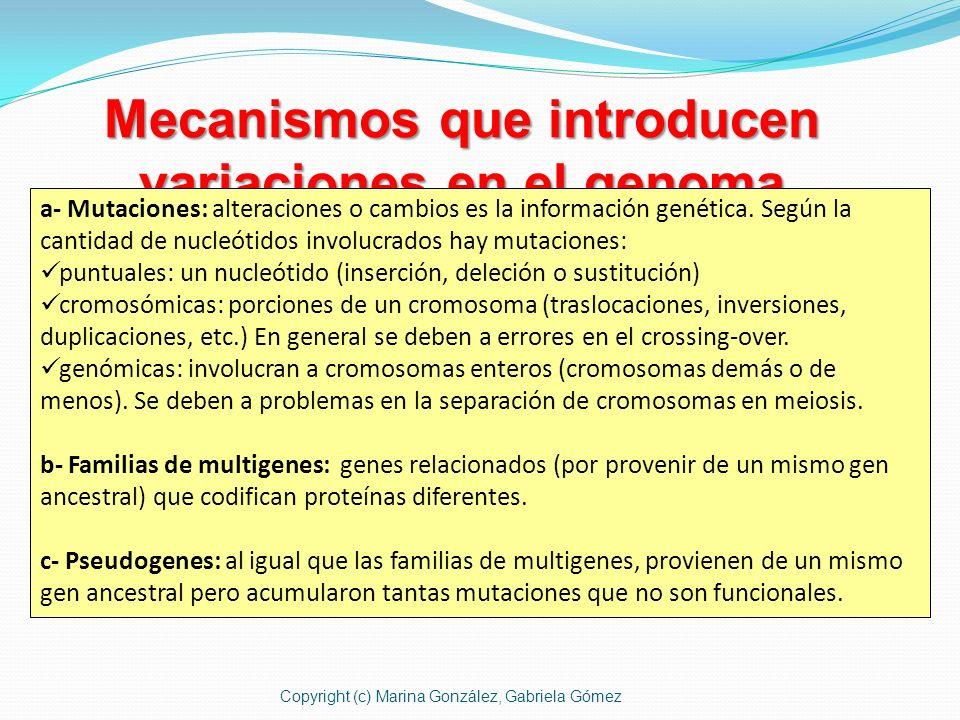 Mecanismos que introducen variaciones en el genoma