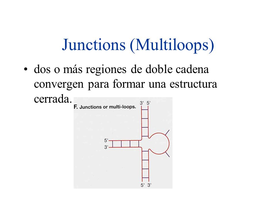 Junctions (Multiloops)