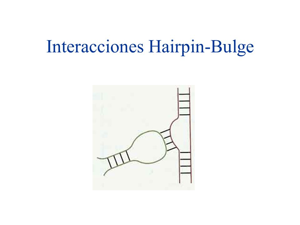 Interacciones Hairpin-Bulge
