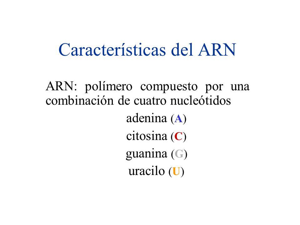 Características del ARN