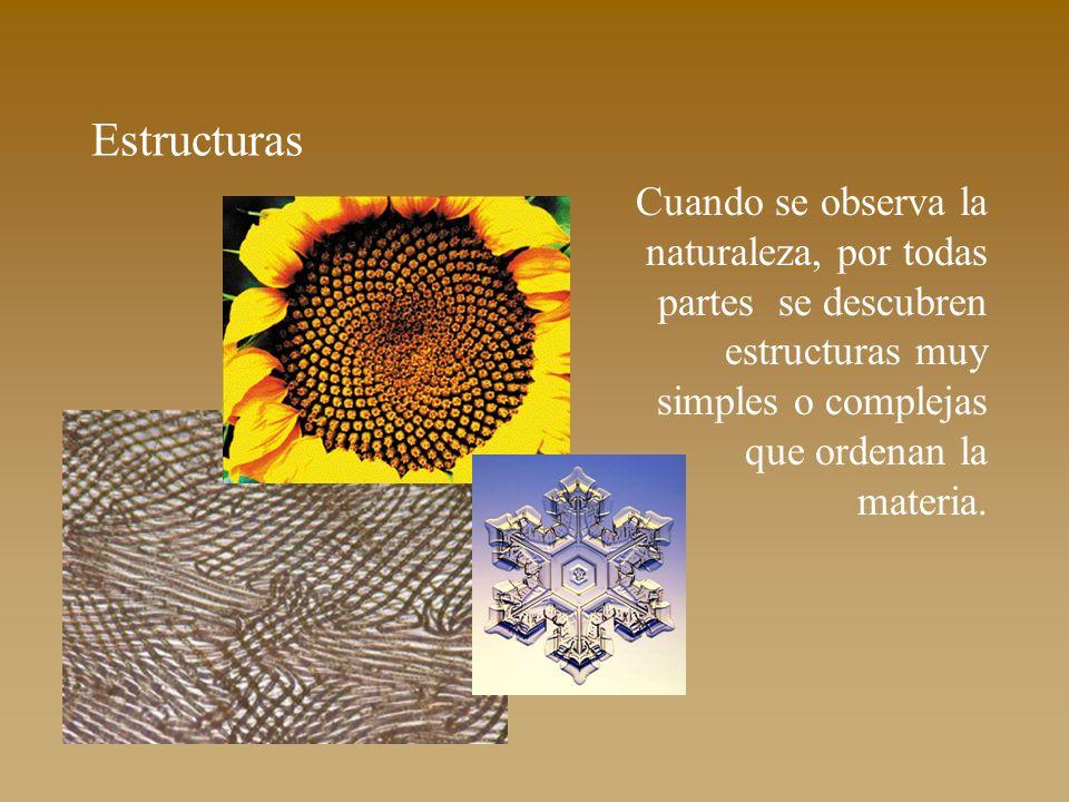 Estructuras Cuando se observa la naturaleza, por todas partes se descubren estructuras muy simples o complejas que ordenan la materia.
