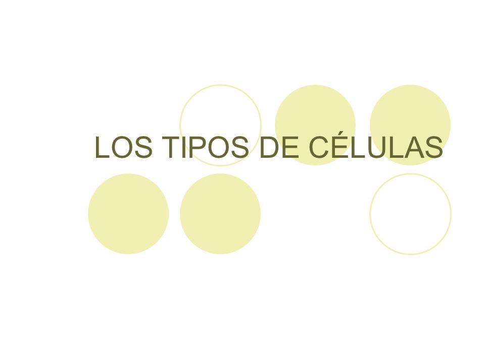 LOS TIPOS DE CÉLULAS