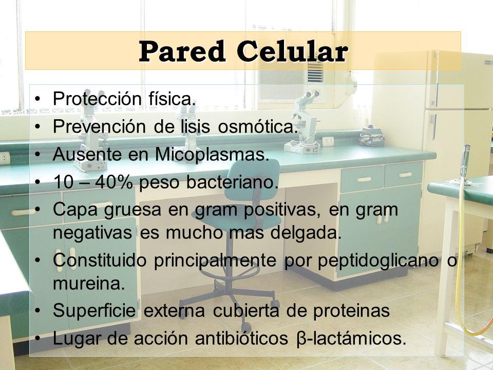 Pared Celular Protección física. Prevención de lisis osmótica.